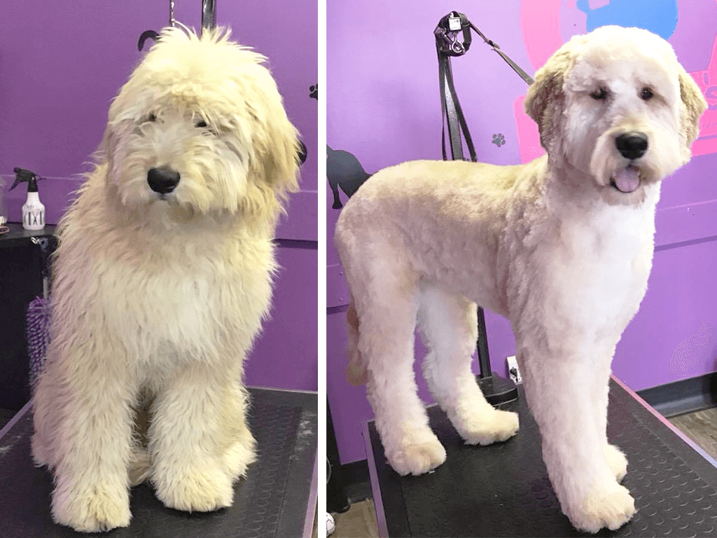 Picture 1 of a dog before & after grooming