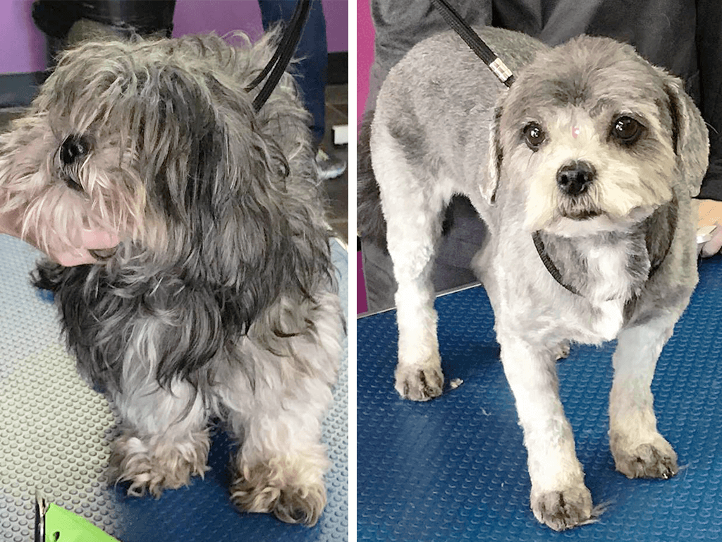 Picture 2 of a dog before & after grooming